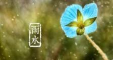 蝴蝶写拟人句 蝴蝶在花丛中飞来飞去改为拟人句