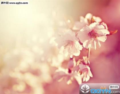 佛教新年四字祝福语