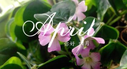 2019正月初七祝福语